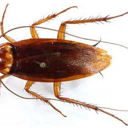 insektpol-dezynsekcja