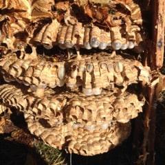 usuwanie gniazd szerszeni