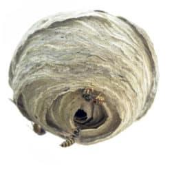 firma usuwająca gniazda szerszeni